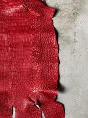 画像4: スモールクロコダイル レッド 41 (4)