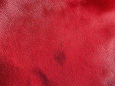 画像2: 牛 ヘアーカウ レッド×ブラウン (2)
