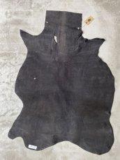 画像6: クードゥー ブラック (6)