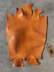 画像1: リザード オレンジ 28cm (1)