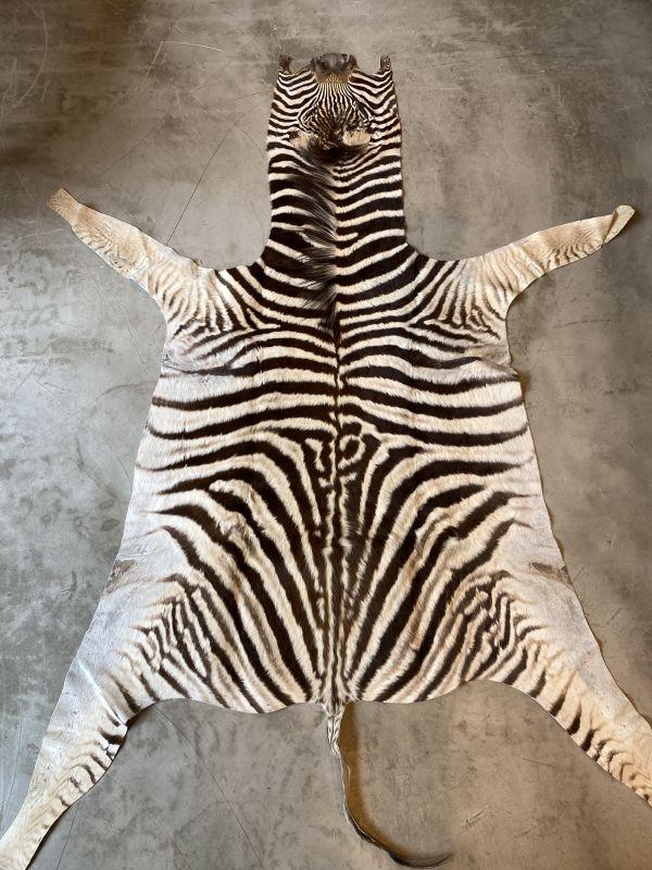 画像1: ベビーゼブラ毛皮 Lサイズ シマウマ革 (1)