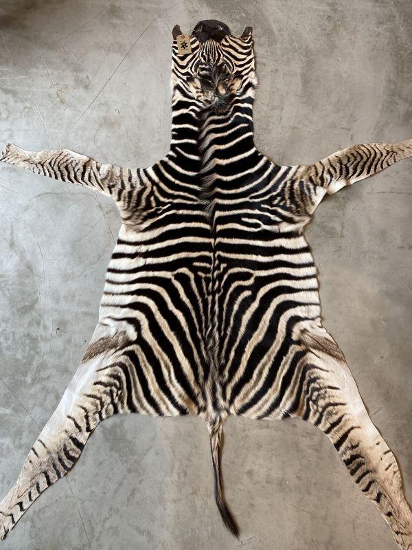 画像1: ベビーゼブラ毛皮 Mサイズ シマウマ革 (1)